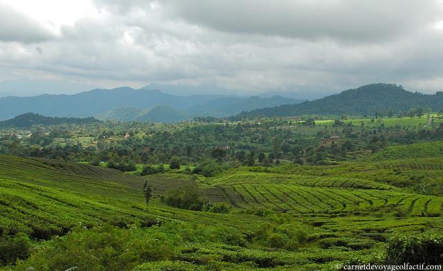 Camaïeu de verts d'un paysage javanais