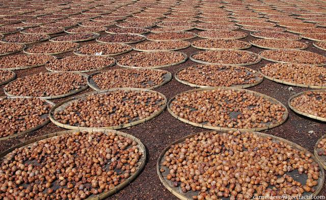 Des milliers de noix de muscade