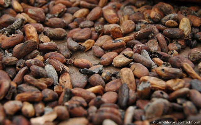 la profondeur des fèves de cacao