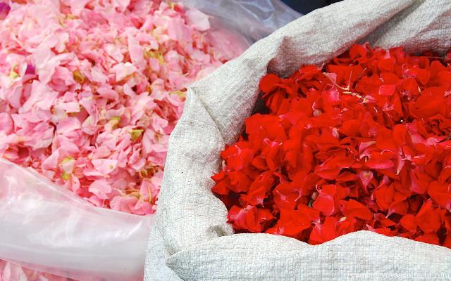 petales de fleurs