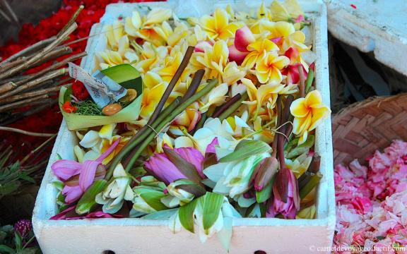 Fleurs de frangipanier et fleurs de lotus