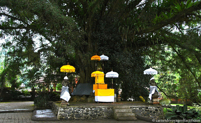 Le Banian Tree, l'arbre de vie balinais