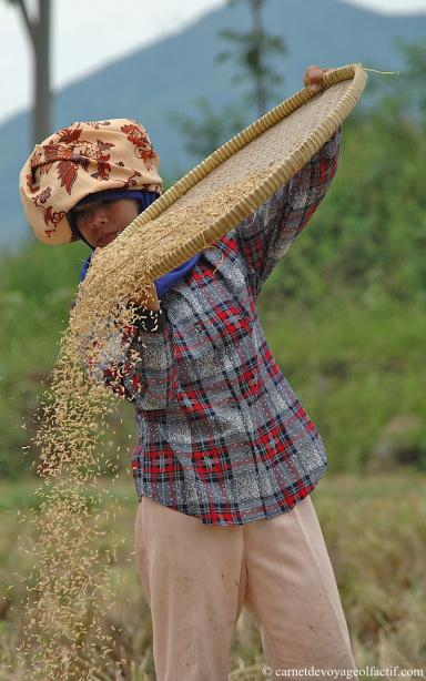 Le riz vole et virevolte dans les airs