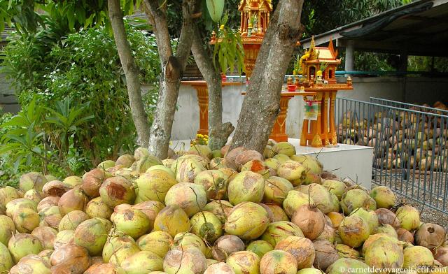 Les noix de coco s'entassent aux pieds des autels