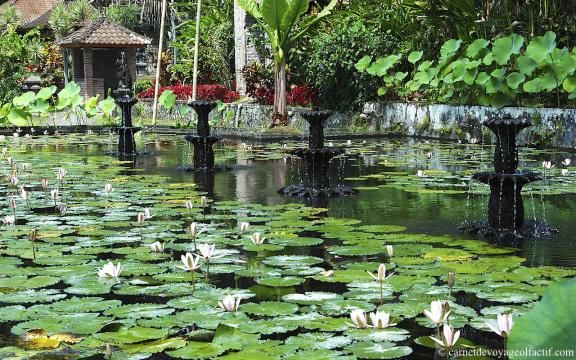 Fleurs de lotus et fontaines