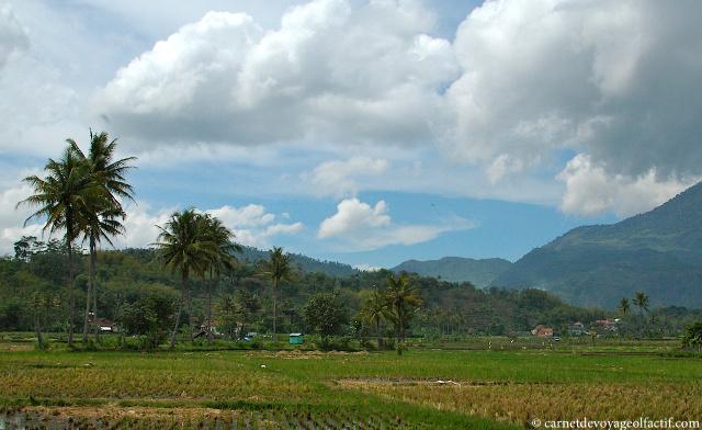 Paysage de rizières sur l'île de Java, Indonésie