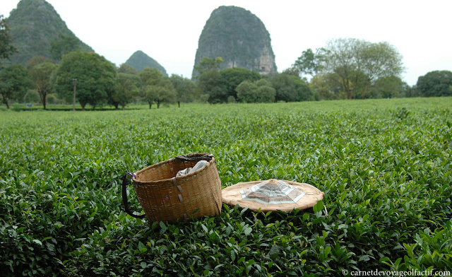 Plantation de thé, Guilin